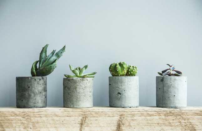Succulents in diy concrete pot. Scandinavian room interior decoration