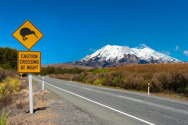Kiwi and mount Ruapehu