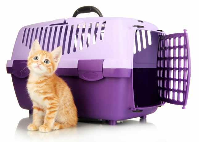 Kitten travelling