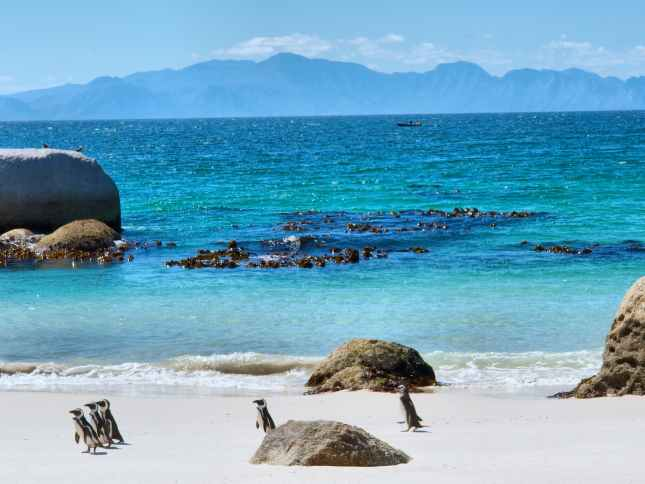 Penguins on beach in South Africa