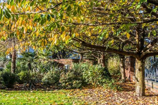 Autumn Color in Birmingham