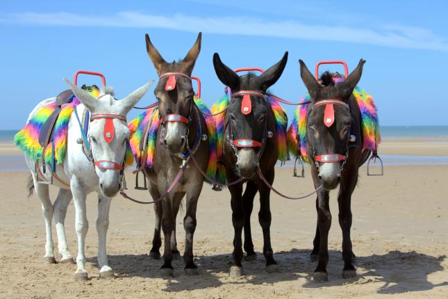 Donkeys on Blackpool Beach